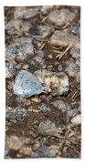 Gossamer-winged Butterfly Beach Towel
