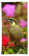 Graceful Honeyeater Beach Towel