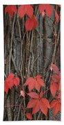 Grape Leaves On Column Beach Towel