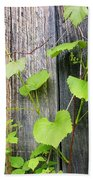 Grape Vines On An Old Barn Beach Towel