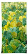 Grapevines In Azores Islands Beach Towel
