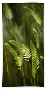 Grass Stems And Seed No.2129 Beach Towel