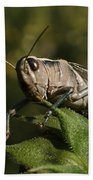 Grasshopper 2 Beach Towel