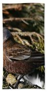 Gray-crowned Rosy Finch Beach Towel