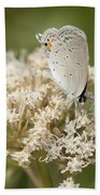 Gray Hairstreak Butterfly On Milkweed Wildflowers Beach Towel