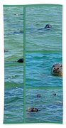 Gray Seals At Chatham - Cape Cod Beach Towel