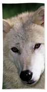 Gray Wolf Face Beach Towel