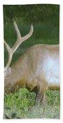 Grazing Bull Elk  Beach Towel