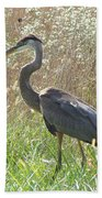 Great Blue Heron - Ardea Herodias Beach Towel