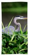 Great Blue Heron Hiding In The Grasses Beach Towel