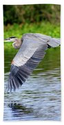 Great Blue Heron Inflight Beach Towel