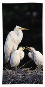 Great Egret In Nest With Young Beach Towel