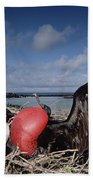 Great Frigatebirds Courting Beach Towel
