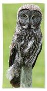 Great Grey Owl, Water Valley, Alberta Beach Towel