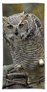 Great Horned Owl Pale Form Kootenays Beach Towel