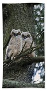 Great Horned Owls Young Beach Towel
