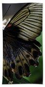 Great Mormon Butterfly Beach Towel