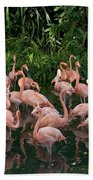 Greater Flamingo Phoenicopterus Ruber Beach Towel