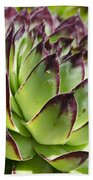 Green And Red Succulent Beach Towel