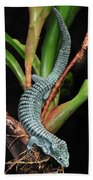 Green Arboreal Alligator Lizard Abronia Beach Towel