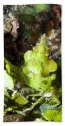 Green Arrowhead Crab, Papua New Guinea Beach Towel