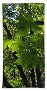 Green Canopy Beach Towel