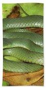 Green Racer Drymobius Melanotropis Amid Beach Towel