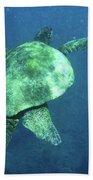 Green Sea Turtle 1 Beach Towel