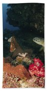 Green Sea Turtle And Underwater Beach Towel
