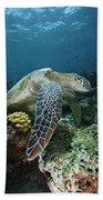 Green Sea Turtle Chelonia Mydas Beach Sheet