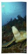 Green Turtle On Reef, Manado, North Beach Towel