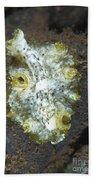 Green, White And Brown Flatworm, Bali Beach Towel