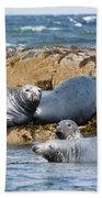 Grey Seals Beach Towel