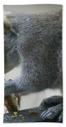 Grey Squirrel Dining Out Beach Towel