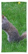 Grey Squirrel In The Rain Beach Towel