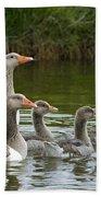 Greylag Goose Anser Anser Couple Beach Towel