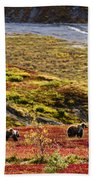 Grizzly Bears And Fall Colours, Denali Beach Towel