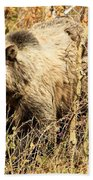 Grizzly In The Brush Beach Towel