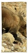 Grizzly On The Rocks Beach Towel