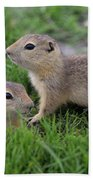 Ground Squirrels, Oak Hammock Marsh Beach Towel