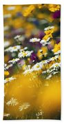 Group Of Daisies Beach Towel