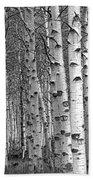 Grove Of Birch Trees Beach Towel