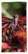 Gulf Fritillary Butterfly Beach Sheet