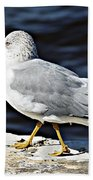 Gull 2 Beach Towel