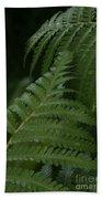 Hapuu Pulu Hawaiian Tree Fern - Cibotium Splendens Beach Towel