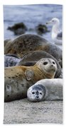 Harbor Seal And Pup Beach Towel