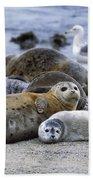 Harbor Seal And Pup Beach Sheet