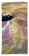 Harbor Seal Beach Towel