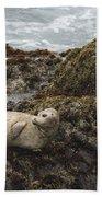 Harbor Seal  Point Lobos State Reserve Beach Towel by Sebastian Kennerknecht