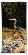 Hard Rock Heron Beach Towel